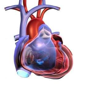 Средства сердечно-сосудистой системы